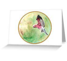Galah, Birds of Hepburn, 2011 Greeting Card