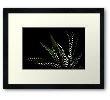 Haworthia Aloe Vera cactus succulent plant white spots Framed Print