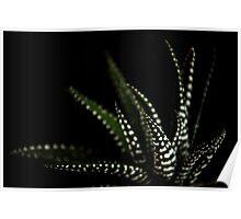 Haworthia Aloe Vera cactus succulent plant white spots Poster