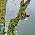 Moss and Dew Drops by relayer51