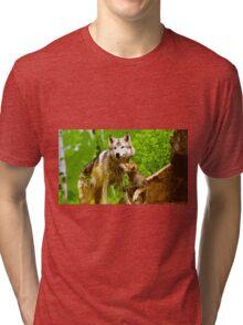 Wild nature - wolves Tri-blend T-Shirt