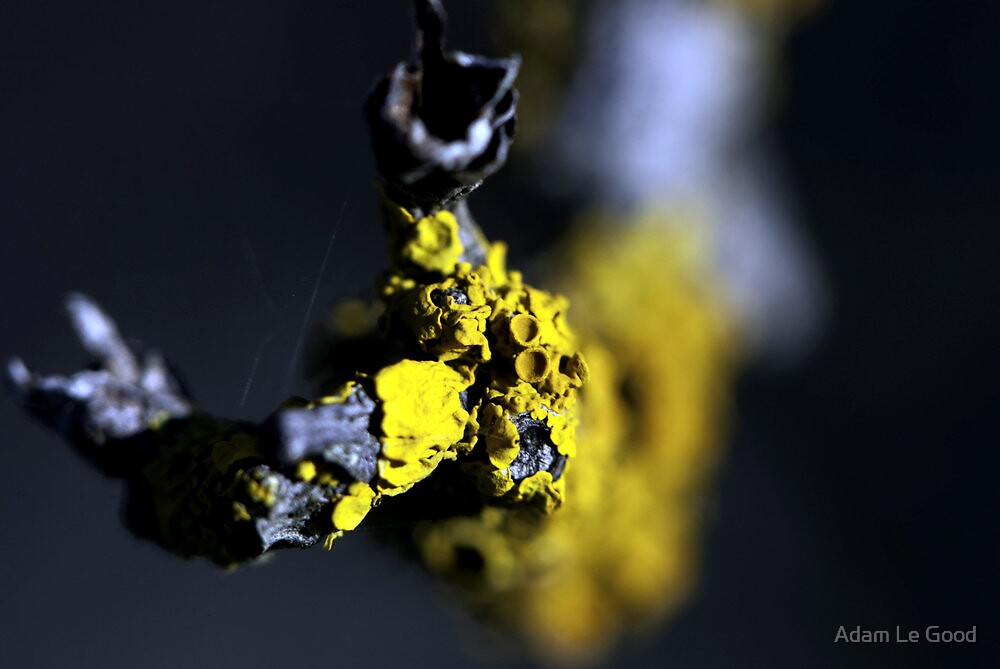 Lichen II by Adam Le Good
