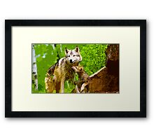 Wild nature - wolves Framed Print