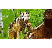 Wild nature - wolves Photographic Print