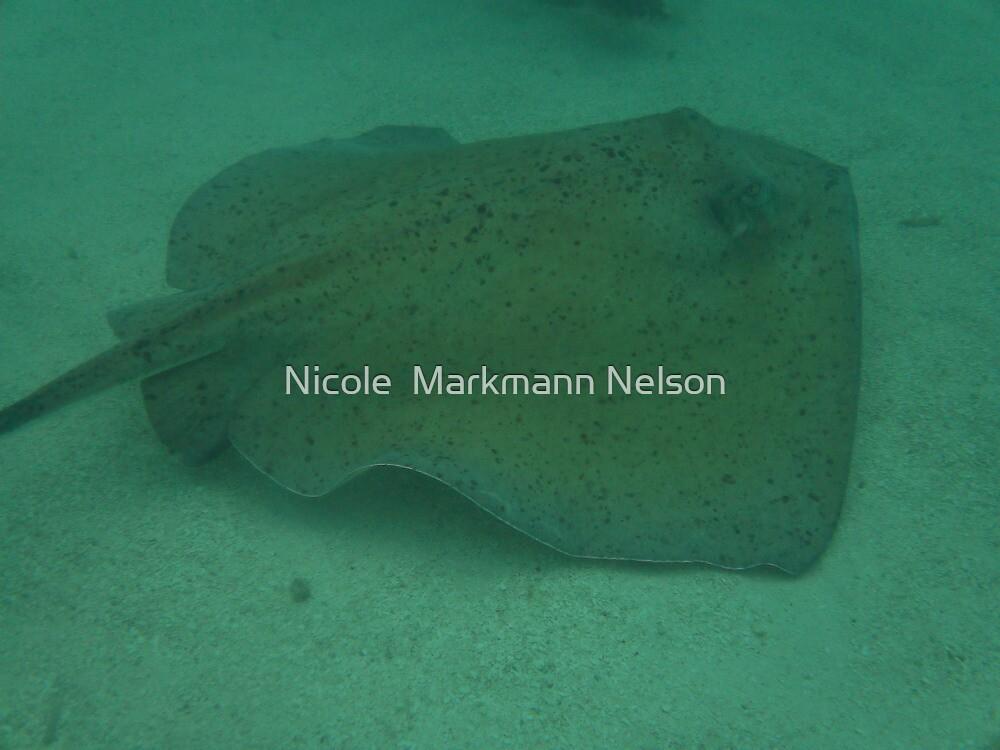 Sting by Nicole  Markmann Nelson