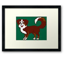 Red Tricolor Australian Shepherd Framed Print