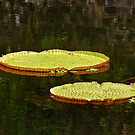 Lily Pads by Karen Stackpole