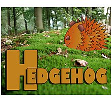 Alphabet ZOO - HEDGEHOG Photographic Print