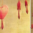 Bleeding hearts by Anne Staub