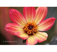 beauty after the rain Photographic Print