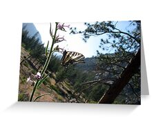 Down Canyon View With Swallowtail Greeting Card