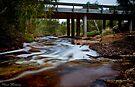 Chapman River by Pene Stevens