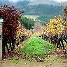 Delheim vineyards by fourthangel