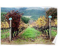 Delheim vineyards Poster