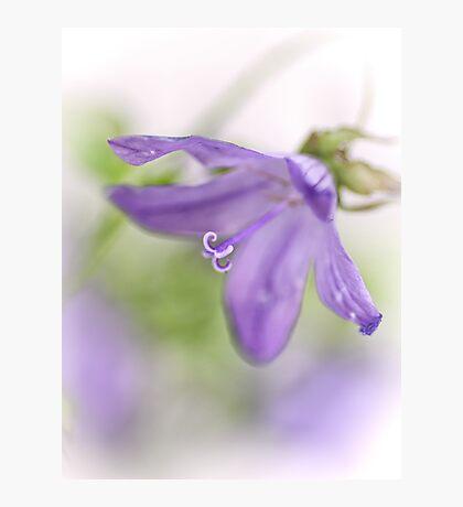Dreamy flowers... II Photographic Print
