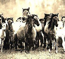 Wild nature - horses by Wiedzminka