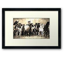 Wild nature - horses Framed Print