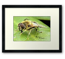 Buzzy Bee Framed Print