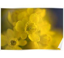 oregon graphe flowers Poster