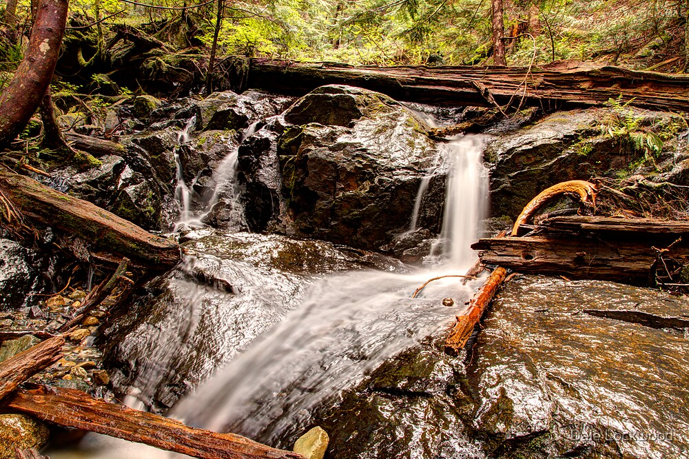 Brook on the Path to Heather Lake by Dale Lockwood