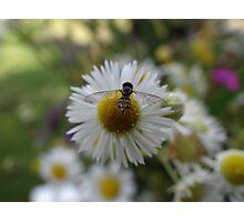 Little Bee, Little Flower Photographic Print