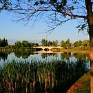 Kilcona Park by Larry Trupp