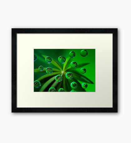 Loopy Lupin  Framed Print