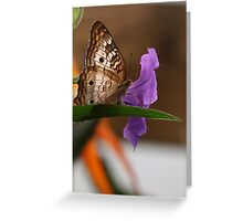 White Peacock Butterfly #2 Greeting Card