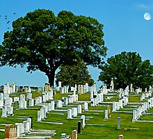 A lovely day at Greenwood Cemetery by Scott Mitchell