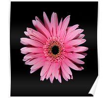 Pink Gerber Daisy Portrait Poster