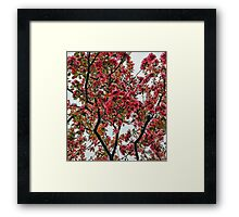 Apple Blossoms - Cloudy Day Framed Print