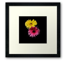 Yellow & Pink Gerber Portrait. Framed Print