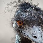 In Your Face Emu by handyandypandy