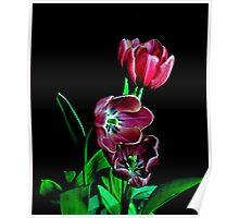 Tulip Portrait. Poster