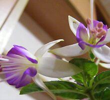 fushia flowers by pauladolphins