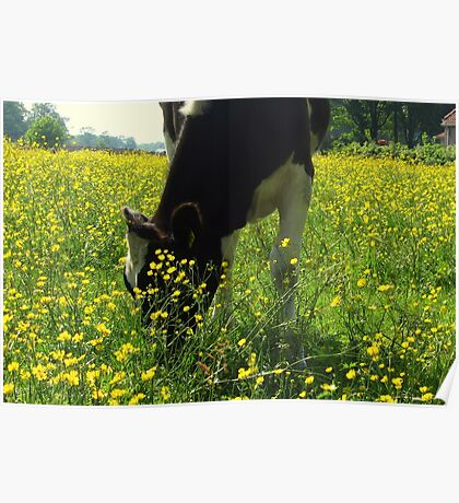 Between The Buttercups Poster