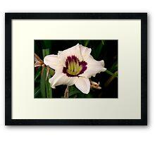 White Tiger Lily Portrait. Framed Print