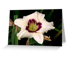 White Tiger Lily Portrait. Greeting Card