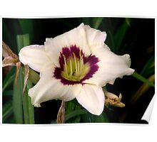 White Tiger Lily Portrait. Poster