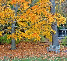 I am so glad I live in a world where there are Octobers. by Barbny