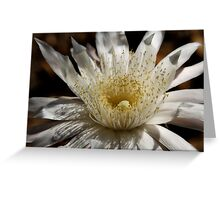 Queen of the Night Blossom  Greeting Card