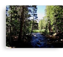 There's A Quiteness In The Shade Canvas Print