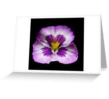 Purple Pansy Portrait. Greeting Card
