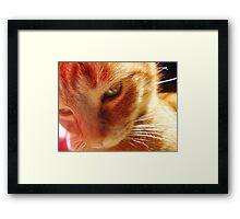 holography cat Framed Print