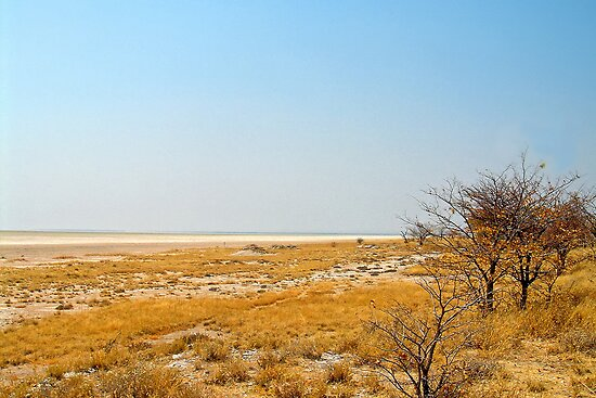 Etosha National Park by globeboater