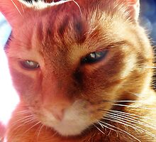 psychic feline by kipari