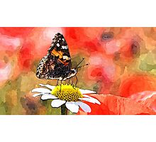 Wild nature - butterfly Photographic Print