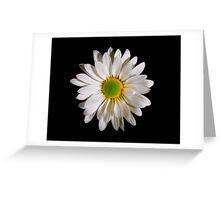 White Daisy Portrait. Greeting Card