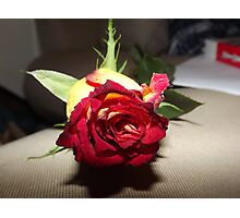 red and yellow tinted rose  Photographic Print