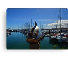 Fish out of water.....Fuerteventura Canvas Print